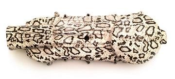 Крышка вариатора Белая змеиная кожа 125-150cc (152QMI, 157QMJ)